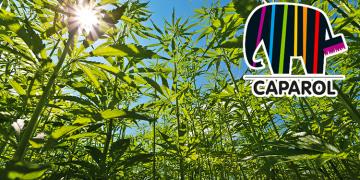 ISOLARE CON LA CANAPA: L'EVOLUZIONE GREEN DEL CAPPOTTO TERMICO